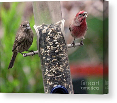 This is a screen shot of a photograph which has been rendered on to canvas and I'm selling it via Fine Art America. It features a couple of House finches at a tube shaped bird feeder filled with seeds. The female (brownish) is on  the left side of the feeder while the male (red) is on the right of the tube. Info re this work of art is @ https://fineartamerica.com/featured/dinner-for-two-patricia-youngquist.html?product=canvas-print