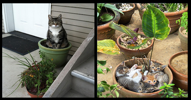 10 Pictures Kitties Who Think They're Growing Plants