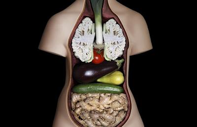 Anatomi Manusia | Pengertian, Unsur Pokok, dan Istilah Anatomi Mahluk Hidup