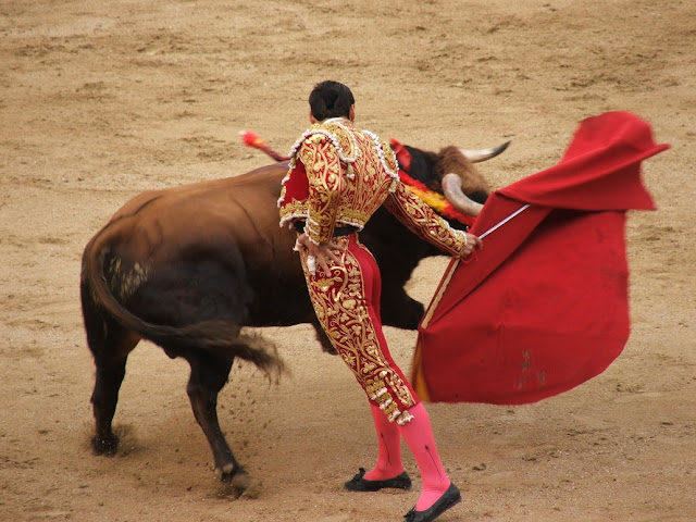Bull Fighting HD Pictures Wallpaper Free Dwonload