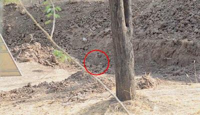 Jawaban macan tutul menyamar