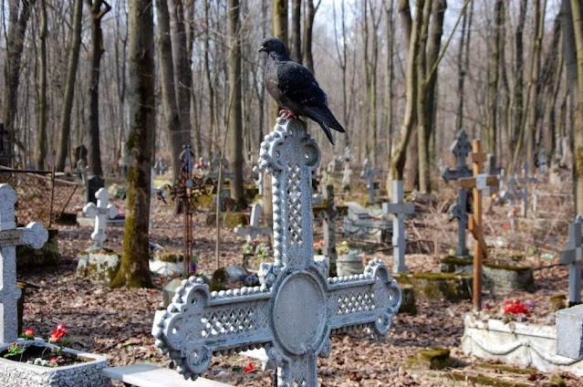 Государство начинает контролировать кладбища – законопроект направлен в Госдуму