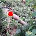 Herdsman Rapes Woman To Death In Ufuezeraku in Ebonyi