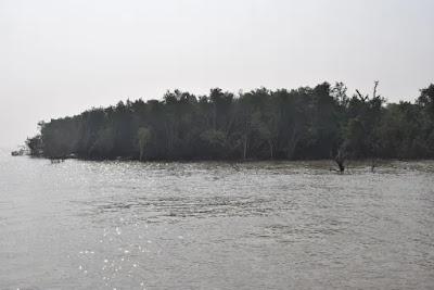 Sundarban from launch