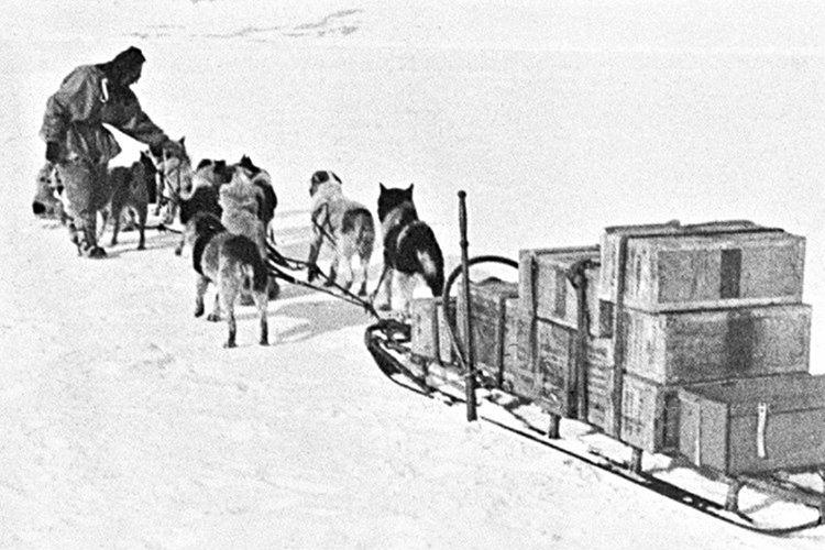 Kar nedeniyle sıkıştığı köpek kızağının içinden kaskatı donmuş dışkısını kullanarak çıktı.