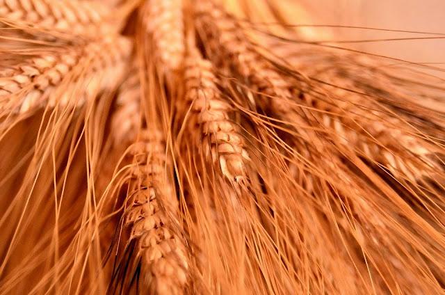 grano saragolla al gusto di Mediterraneo, foodfilebasilicata