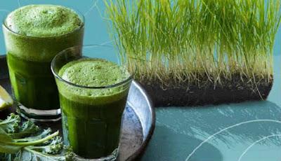 Minuman dari wheatgrass untuk obat asam urat