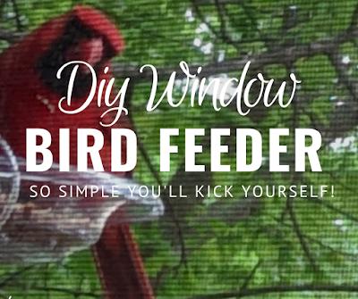 Amazing One Dollar Bird Feeder - The birds love it!