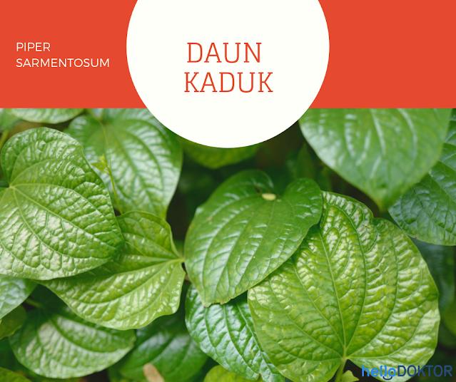 Daun Kaduk