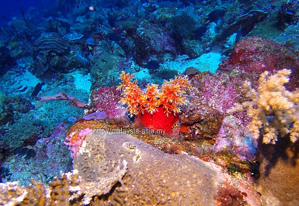 Underwater Photo Alor Island