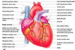 Kesamaan aliran kembali dengan keluaran jantung