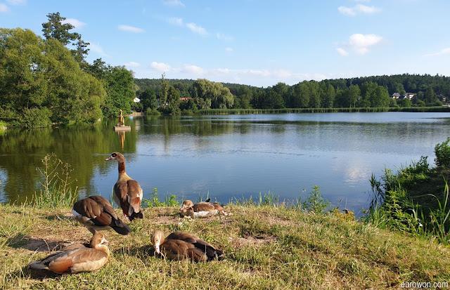 Patos en un lago del sur de Alemania