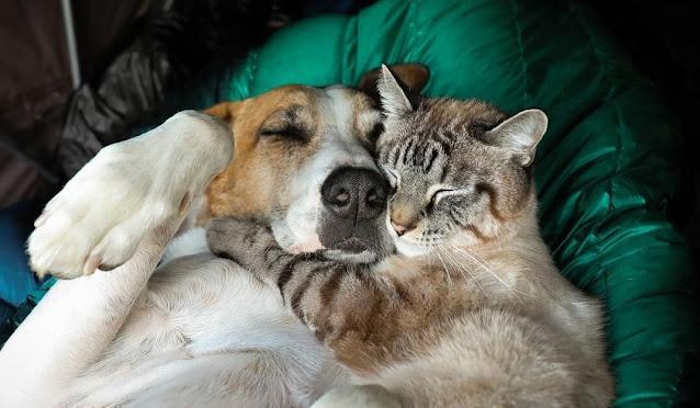 Семья спасла маленького котенка и щенка. До сих пор они все дружно живут вместе
