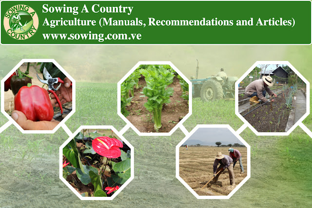 Agriculture (Manuals, Recommendations and Articles)