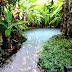Encantos da natureza: Fervedouros do Jalapão
