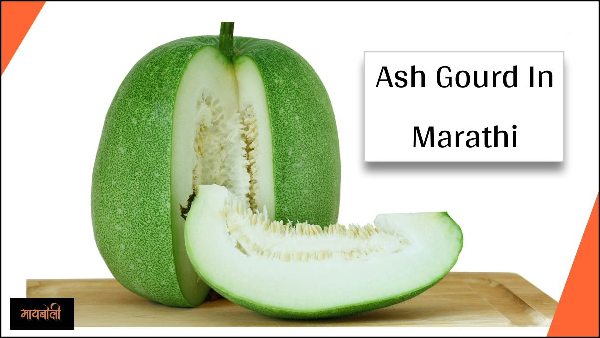 Ash Gourd In Marathi