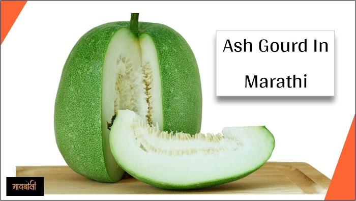 Ash Gourd In Marathi - Name, Benefits, Side Effects & Everything