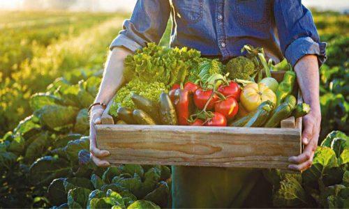 Τριακόσια πενήντα εκατομμύρια ευρώ για τους νεοεισερχόμενους στο αγροτικό επάγγελμα θα διατεθούν από το επιχειρησιακό πρόγραμμα του Υπουργείου Αγροτικής Ανάπτυξης και Τροφίμων. Στόχος η προσέλκυση και η παραμονή νέων ανθρώπων στον πρωτογενή τομέα.