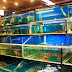 Hồ hải sản - Xu hướng hồ cá cảnh mới hiện nay