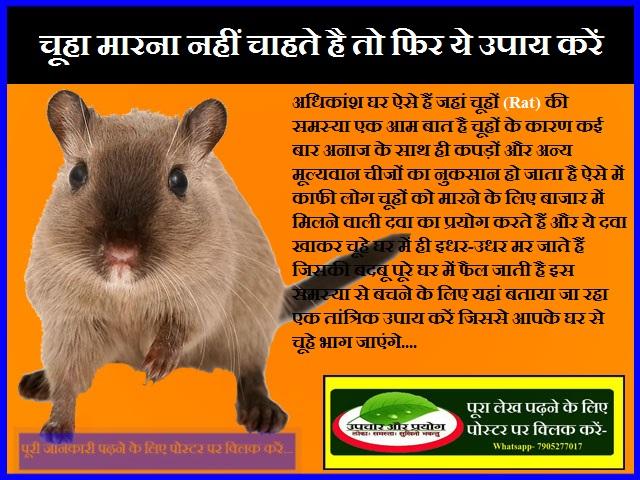 चूहा मारना नहीं चाहते है तो फिर ये उपाय करें