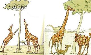 contoh Soal dan Pembahasan Tentang Teori Evolusi