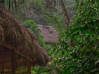 Fra Amazonas. Photo: pxhere.com - CC-by-sa 2.0