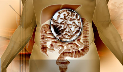 Probióticos buenos para la salud prevenir enfermedades