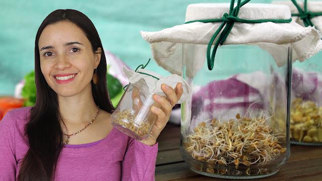 Como germinar brotos | Aprenda as bases e tenha mais saúde