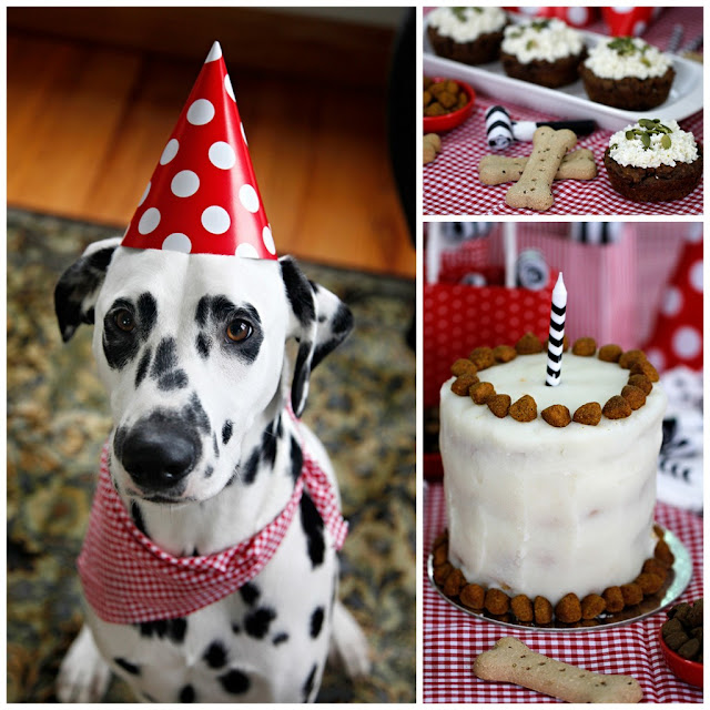 Dalmatian dog at DIY dog birthday party with cat and treats