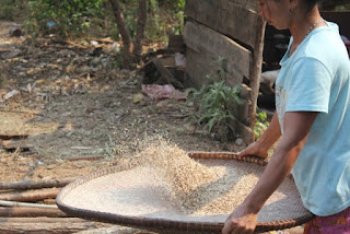 Traditional way of preparing rice