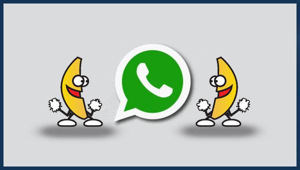كيفية إنشاء صور GIF خاصة بك في تطبيق WhatsApp