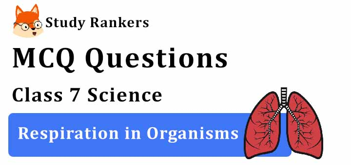 MCQ Questions for Class 7 Science: Ch 10 Respiration in Organisms