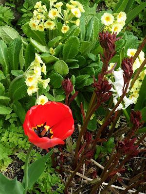 Blueberry Patch April 2012