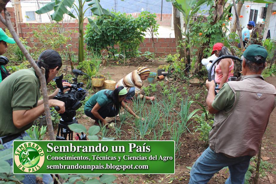 agricultura urbana en barrio de Caracas