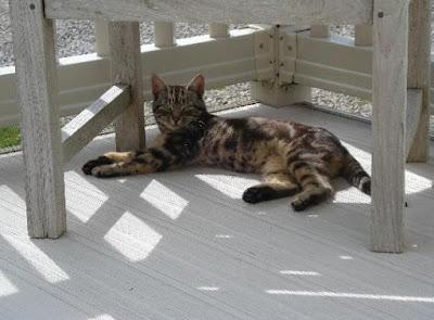Karakter Kucing Bramble