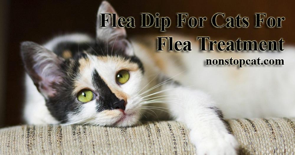 Flea Dip For Cats For Flea Treatment