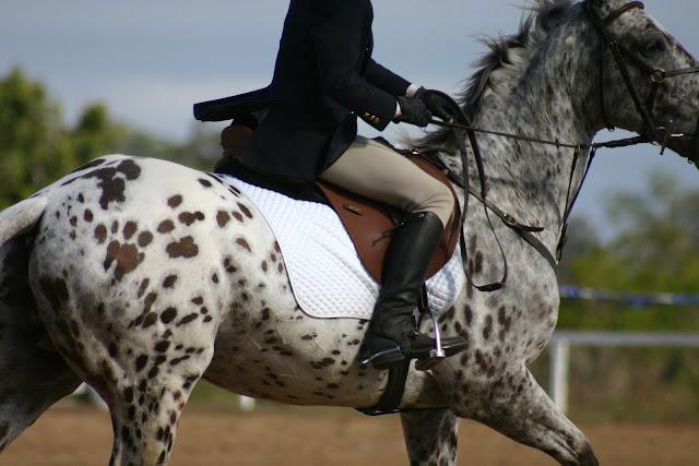 W jaki sposób rozluźnić i zaokrąglić sztywnego konia?