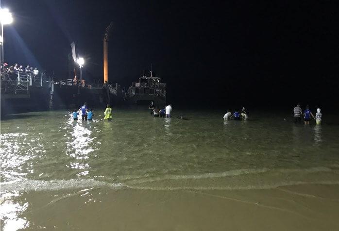 タンガルーマアイランドリゾートの桟橋横のビーチででイルカの餌付けが始まる写真