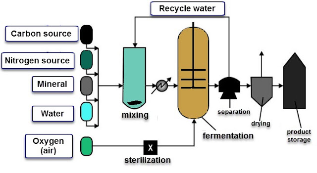 Figure: General Diagram of SCP (Single Cell Protein) Production Process / Stages