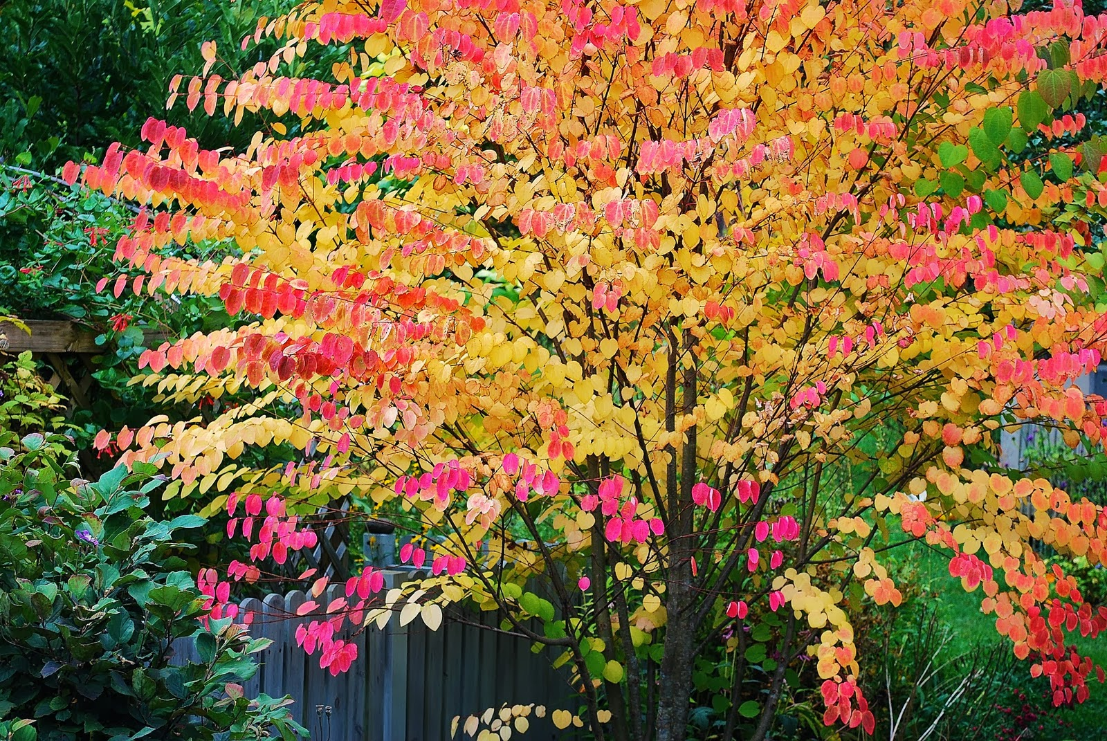 The Garden Plot: 10 Best Trees for Brilliant Fall Color