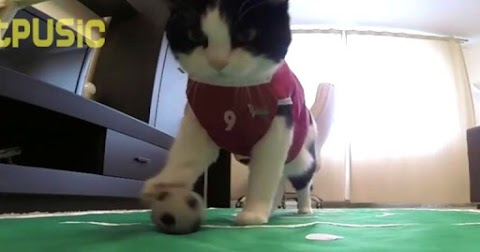 The famous cat who loves football so much and celebrates in a strange way when she wins.