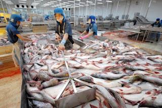 Hubungan Sosial dan Produksi Patin di Vietnam - Hantu Laut