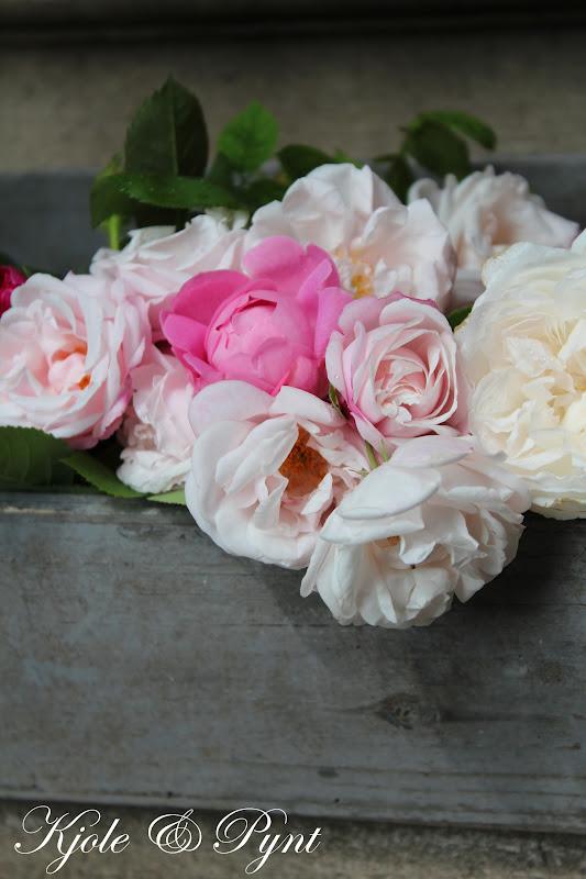 seidenfeins blog vom sch nen landleben barocke rosenpracht historische rosen historic roses. Black Bedroom Furniture Sets. Home Design Ideas