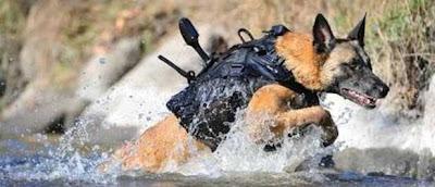 perro de la guerra