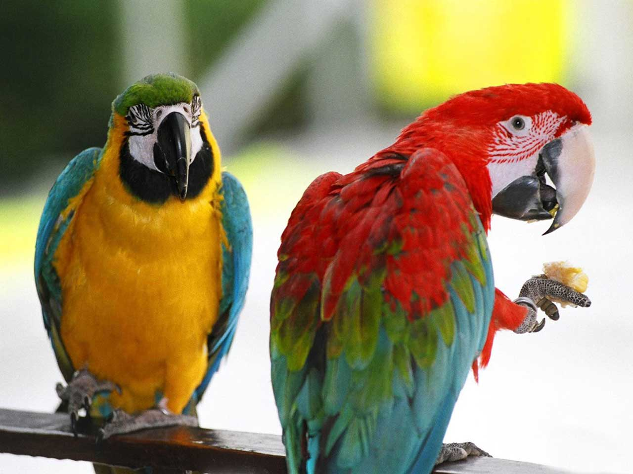 Beautiful Birds - Parrots