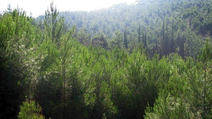 Έβρος: Κατάθεση στοιχείων για την εξαίρεση εκτάσεων από τον δασικό χάρτη