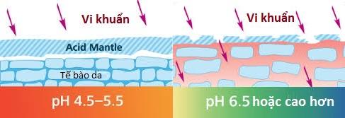 Lớp màng Acid có tác dụng giữ ẩm vào bảo vệ da khỏi vi khuẩn