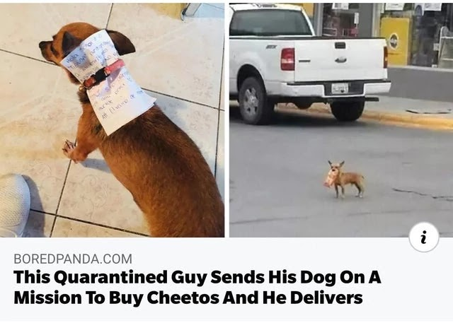 mission-to-buy-cheetos-he-send-his-dog-for-delivers-him