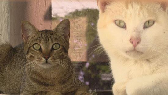 juiz ongs alimentar gatos raca humana