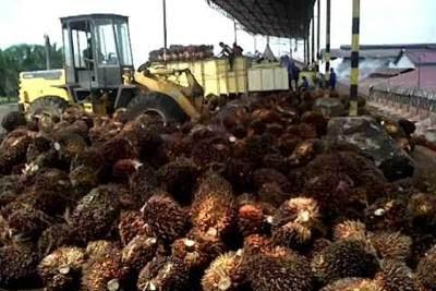 Lowongan Kerja Pekanbaru : Perusahaan Perkebunan  & Pengolahan Kelapa Sawit Agustus 2017